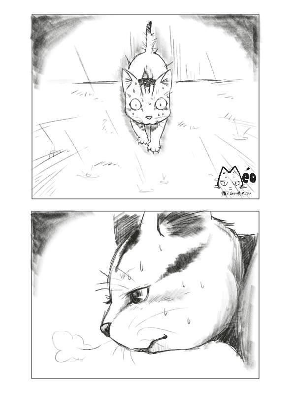 Meo hoang 04