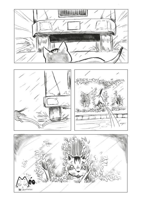 Meo hoang 06