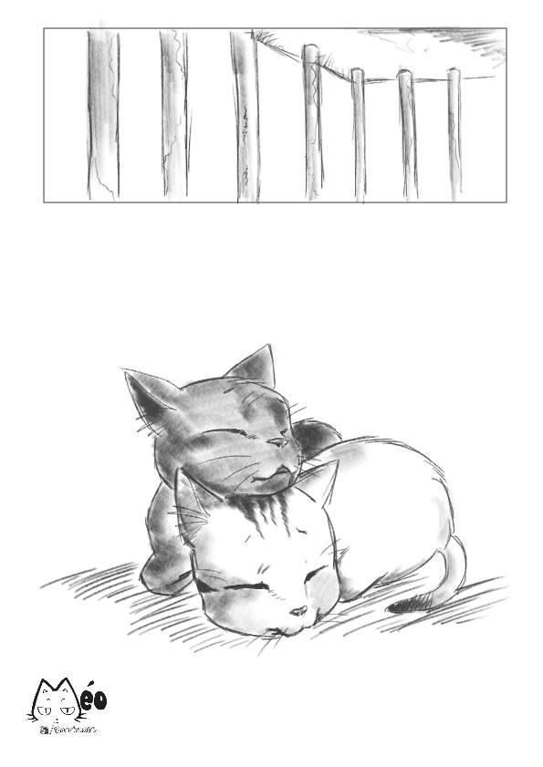 Meo hoang 13