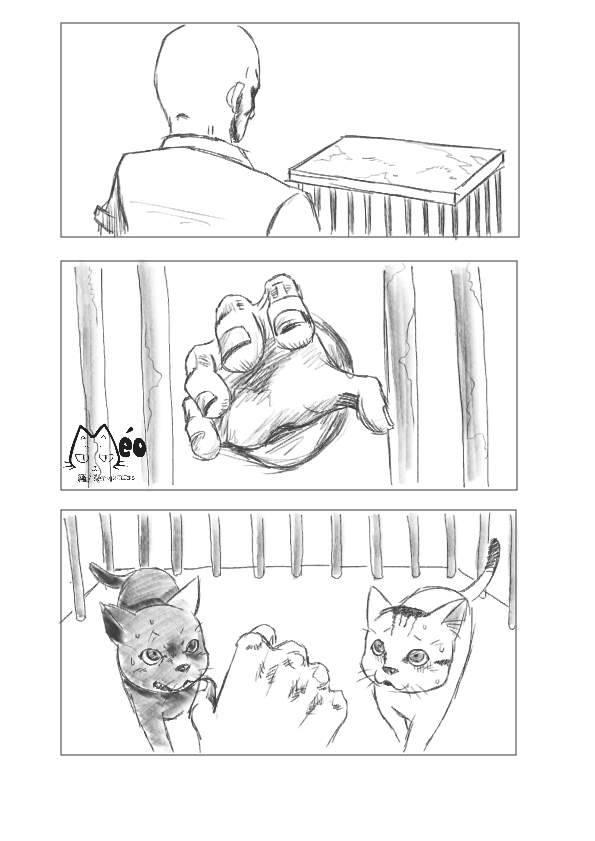 Meo hoang 14